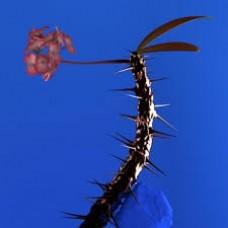 "Flume : Skin Companion Ep Ii (12"" Vinyl) (General)"