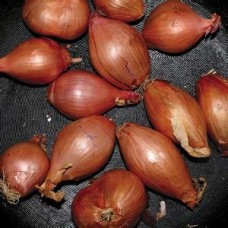 Segall Ty : Fried Shallots (Vinyl EPs) (General)